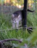 Katje in het gras Stock Foto