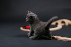 Katje het spelen met een houten trein Stock Afbeeldingen