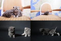 Katje het spelen op een donkere achtergrond, multicam, het scherm verdeelde in vier delen Stock Foto's