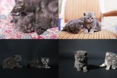 Katje het spelen op een donkere achtergrond, multicam, het scherm verdeelde in vier delen Royalty-vrije Stock Afbeelding