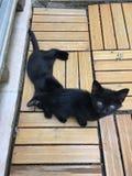 Katje het zwarte spelen Royalty-vrije Stock Afbeeldingen
