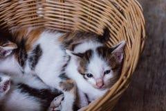 Katje in mand Stock Afbeelding
