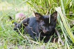 Katje met één oog Royalty-vrije Stock Fotografie