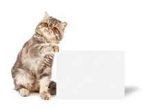 Katje met aanplakbiljet Stock Afbeelding