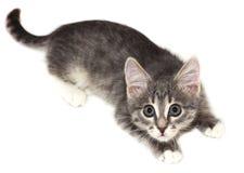 Katje met afluisteraar Royalty-vrije Stock Foto's