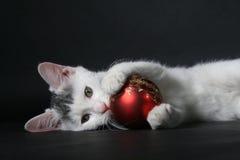 Katje met bal van Kerstmis. Stock Fotografie