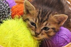 Katje met ballen van garen stock foto's
