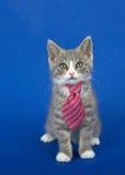 Katje met band op blauwe achtergrond Royalty-vrije Stock Foto