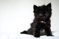 Katje met blauwe ogen Royalty-vrije Stock Fotografie