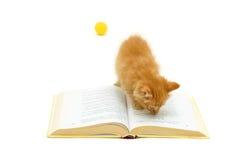Katje met boek Royalty-vrije Stock Foto's