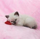Katje met boek die op roze achtergrond liggen Stock Foto's