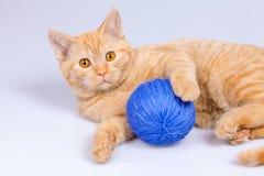 Katje met clew royalty-vrije stock afbeelding