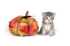 Katje met dalingsdecoratie Stock Foto