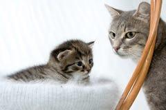 Katje met moeder stock afbeelding