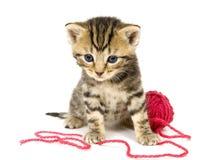 Katje met rode bal van garen op witte achtergrond Stock Fotografie