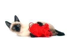 Katje met rood garen Royalty-vrije Stock Foto's