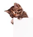 Katje met spatie royalty-vrije stock afbeelding