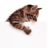 Katje met spatie stock afbeeldingen