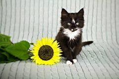Katje met zonnebloem Royalty-vrije Stock Fotografie