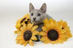 Katje met zonnebloemen Stock Fotografie