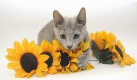 Katje met zonnebloemen Royalty-vrije Stock Foto's