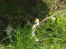Katje onder het gras royalty-vrije stock afbeeldingen