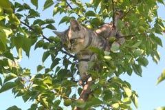Katje op de boom Stock Fotografie