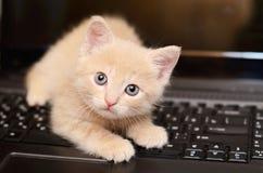 Katje op de computer Stock Foto