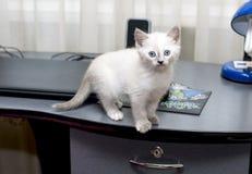 Katje op een computerlijst stock fotografie