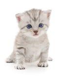 Katje op een witte achtergrond Royalty-vrije Stock Foto