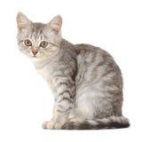 Katje op een witte achtergrond Stock Foto