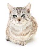 Katje op een witte achtergrond Royalty-vrije Stock Fotografie