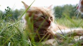 Katje op groen gras stock footage