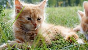 Katje op groen gras stock videobeelden