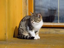 Katje op het venster Royalty-vrije Stock Foto's