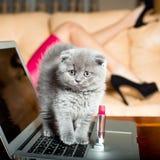 Katje op laptop met lippenstift stock foto's