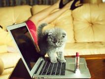 Katje op laptop met lippenstift stock fotografie