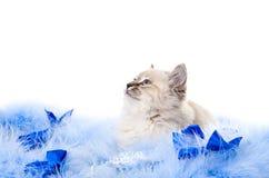 Katje op pluizige het blauw van het Nieuwjaar Royalty-vrije Stock Foto's
