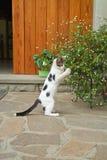 Katje op twee poten Stock Foto's