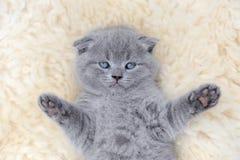 Katje op witte deken Stock Foto
