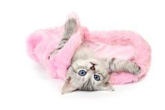 Katje in roze bontjas op witte achtergrond Royalty-vrije Stock Fotografie