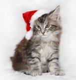 Katje in santahoed Royalty-vrije Stock Afbeeldingen