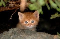 Katje in struik Royalty-vrije Stock Afbeeldingen