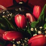 Katje in tulpen Stock Afbeeldingen