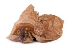 Katje in verpakkingsdocument Royalty-vrije Stock Afbeelding