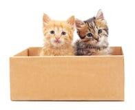 Katjes in de doos Royalty-vrije Stock Afbeeldingen