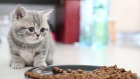 Katjes die close-upmening eten stock video