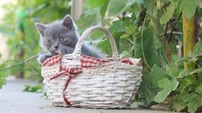 Katjes die in een mand uit in de werf spelen stock videobeelden