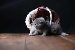 Katjes die in mand spelen stock fotografie
