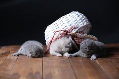 Katjes die in mand spelen stock foto